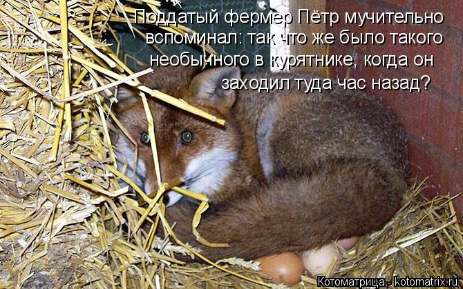 Котоматрица: Поддатый фермер Пётр мучительно вспоминал: так что же было такого  необычного в курятнике, когда он  заходил туда час назад?
