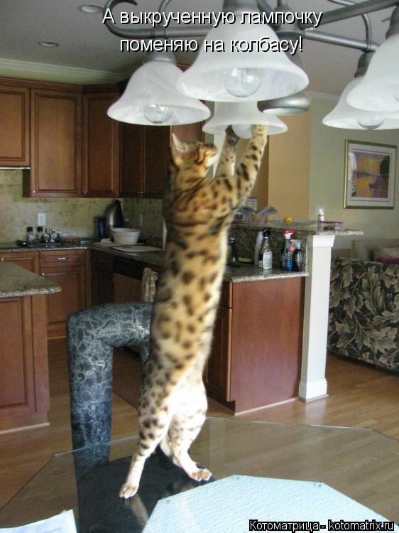 Котоматрица: А выкрученную лампочку поменяю на колбасу!