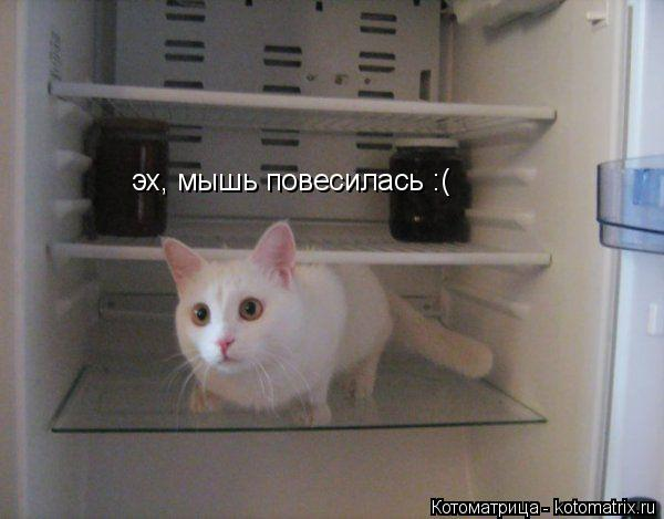 Котоматрица: эх, мышь повесилась :(