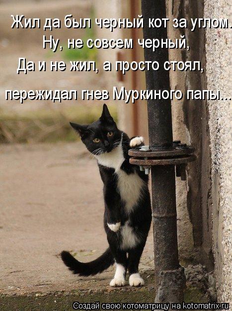 Котоматрица: Жил да был черный кот за углом. Ну, не совсем черный, Да и не жил, а просто стоял, пережидал гнев Муркиного папы...