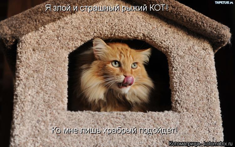 Котоматрица: Я злой и страшный рыжий КОТ! Ко мне лишь храбрый подойдёт!