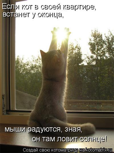 Котоматрица: Если кот в своей квартире, встанет у оконца,  он там ловит солнце! мыши радуются, зная,