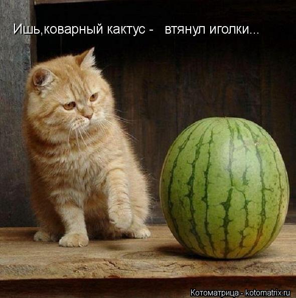 Котоматрица: Ишь,коварный кактус -  втянул иголки...