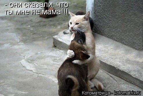 Котоматрица: - они сказали, что ты мне не мама!!!
