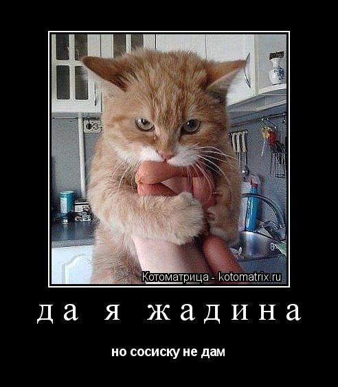Котоматрица: да я жадина  но сосиску не дам