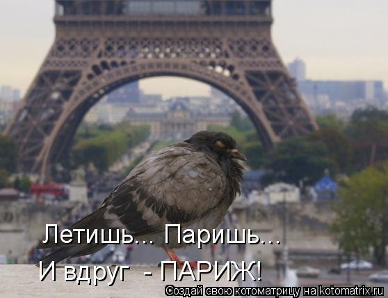 Котоматрица: И вдруг  - ПАРИЖ! Летишь... Паришь...