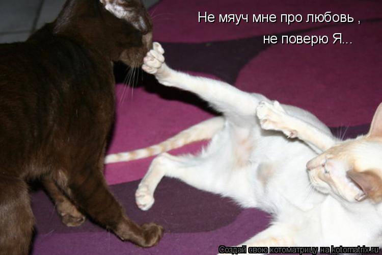 Котоматрица: Не мяуч мне про любовь , не поверю Я...