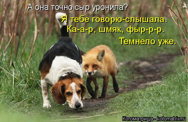 http://kotomatrix.ru/images/lolz/2014/04/07/kotomatritsa_G1.jpg