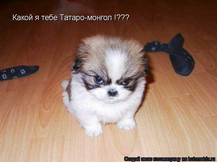 Котоматрица: Какой я тебе Татаро-монгол !???
