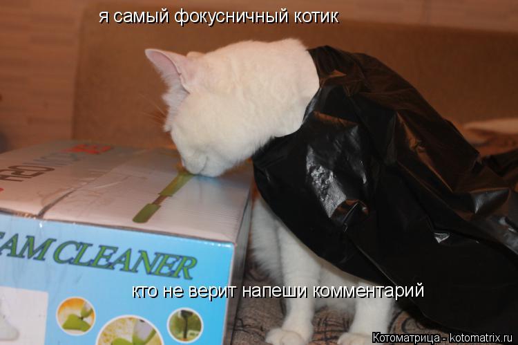 Котоматрица: я самый фокусничный котик кто не верит напеши комментарий