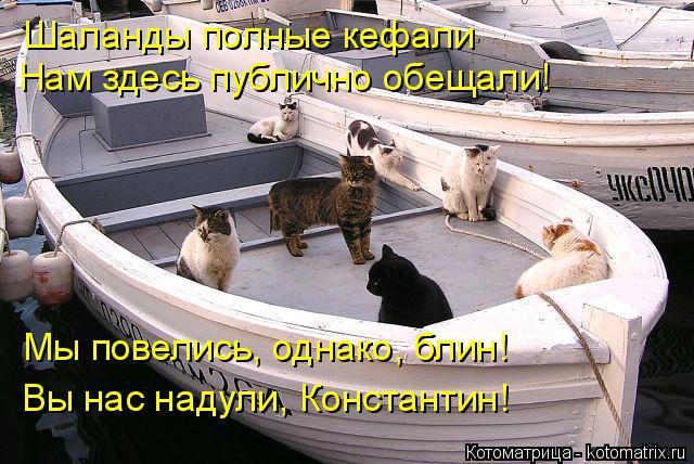 Котоматрица: Шаланды полные кефали Нам здесь публично обещали! Мы повелись, однако, блин! Вы нас надули, Константин!