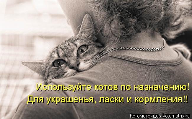 Котоматрица: Используйте котов по назначению! Для украшенья, ласки и кормления!!