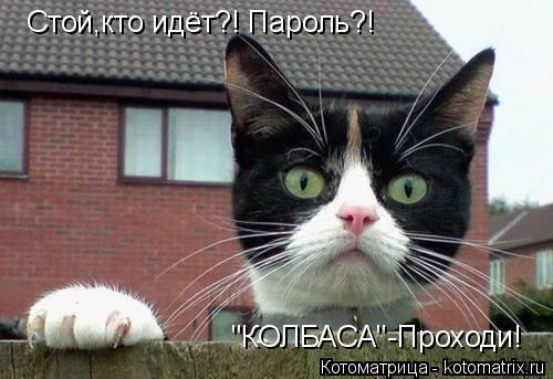 """Котоматрица: Стой,кто идёт?! Пароль?! """"КОЛБАСА""""-Проходи!"""