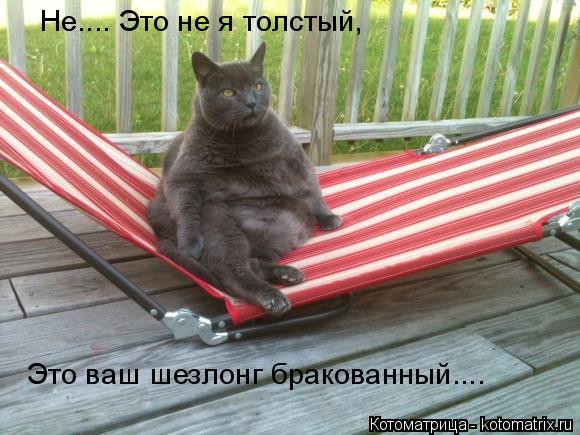 Котоматрица: Не.... Это не я толстый, Это ваш шезлонг бракованный....