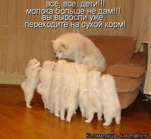 Котоматрица: всё, всё, дети!!!  молока больше не дам!!! вы выросли уже, переходите на сухой корм!