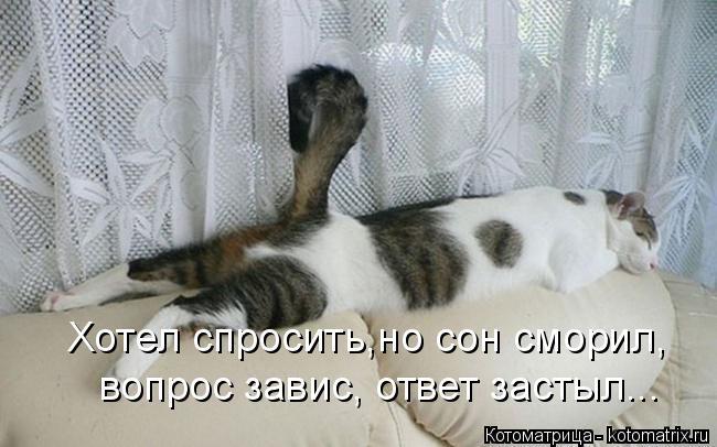 Котоматрица: Хотел спросить,но сон сморил, вопрос завис, ответ застыл...