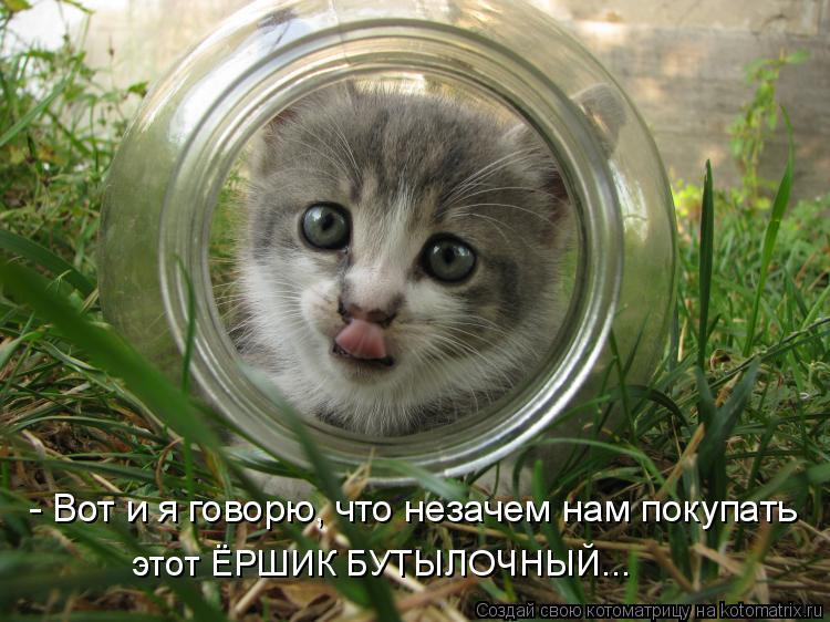 Котоматрица: - Вот и я говорю, что незачем нам покупать этот ЁРШИК БУТЫЛОЧНЫЙ...