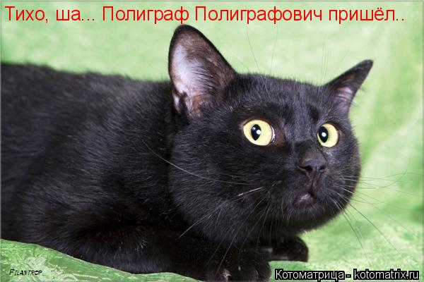 Котоматрица: Тихо, ша... Полиграф Полиграфович пришёл..