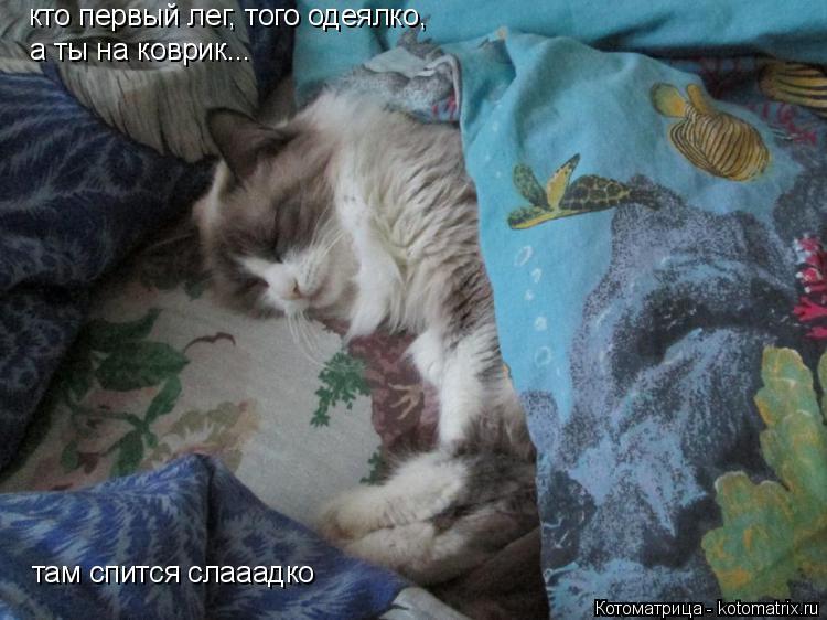 Котоматрица: кто первый лег, того одеялко, а ты на коврик... там спится слааадко