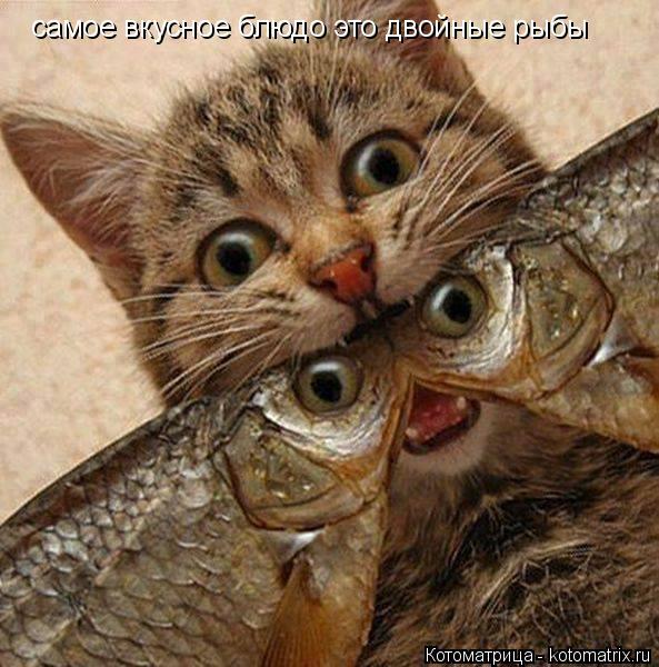 Котоматрица: самое вкусное блюдо это двойные рыбы