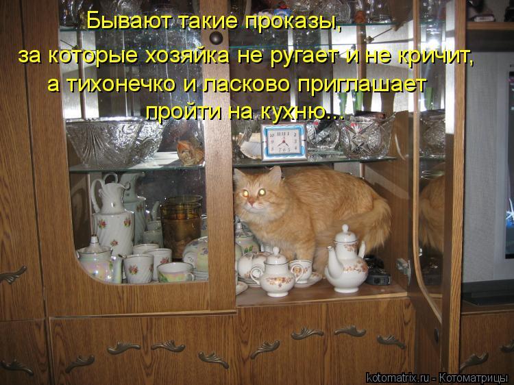 Котоматрица: Бывают такие проказы, за которые хозяйка не ругает и не кричит,  а тихонечко и ласково приглашает  пройти на кухню...