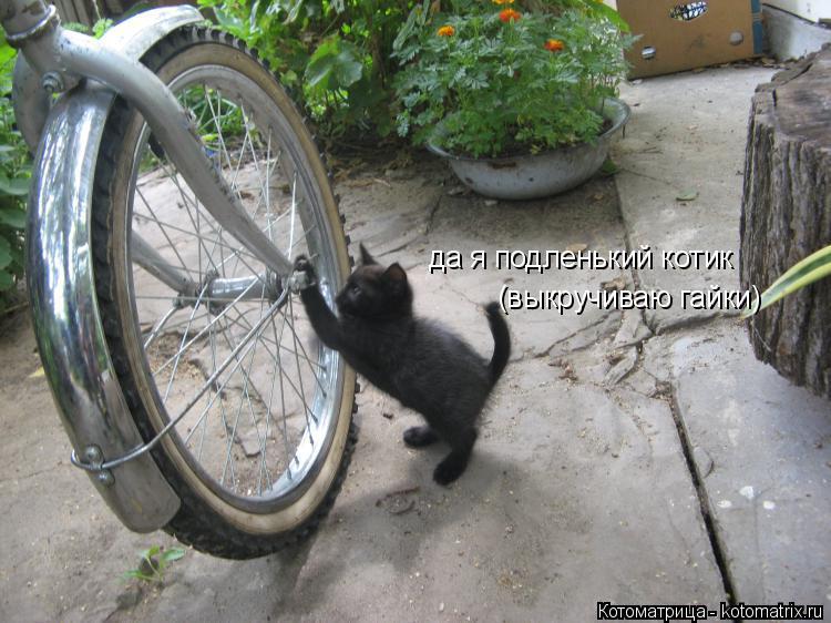 Котоматрица: да я подленький котик да я подленький котик (выкручиваю гайки)