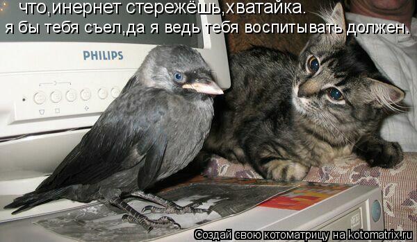 Котоматрица: что,инернет стережёшь,хватайка. я бы тебя съел,да я ведь тебя воспитывать должен.