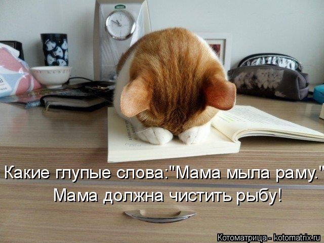"""Котоматрица: Какие глупые слова:""""Мама мыла раму."""" Мама должна чистить рыбу!"""