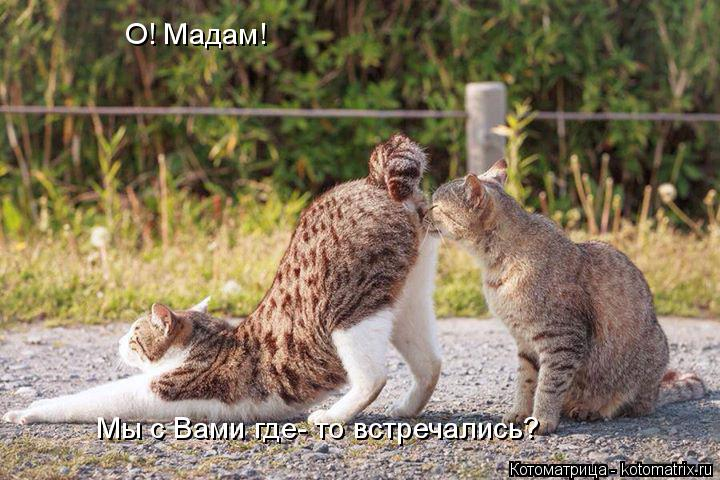 Котоматрица: О! Мадам! Мы с Вами где- то встречались?