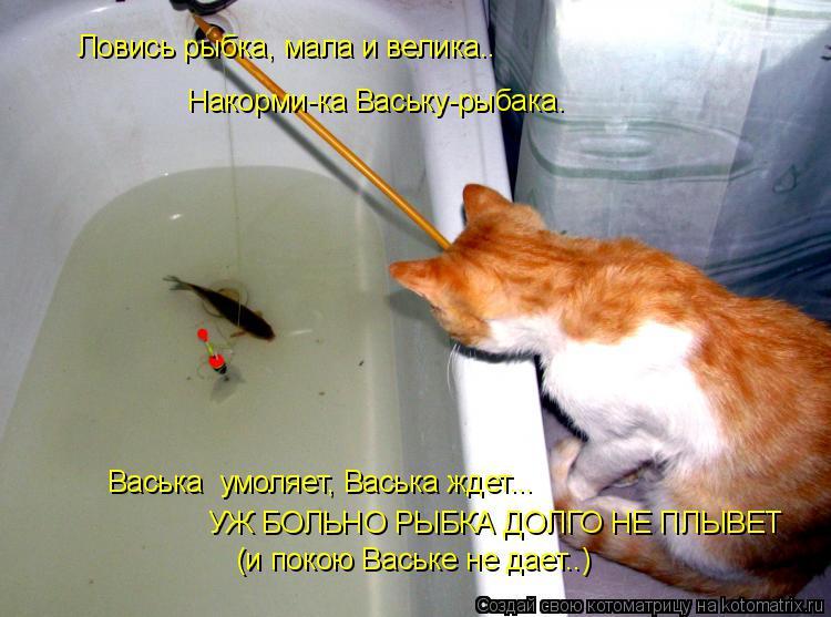 Котоматрица: Ловись рыбка, мала и велика.. Накорми-ка Ваську-рыбака. Васька  умоляет, Васька ждет... УЖ БОЛЬНО РЫБКА ДОЛГО НЕ ПЛЫВЕТ (и покою Ваське не дает..
