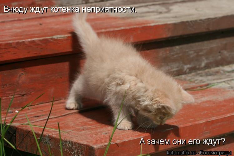 Котоматрица: Вчюду ждут котенка неприятности. А зачем они его ждут?