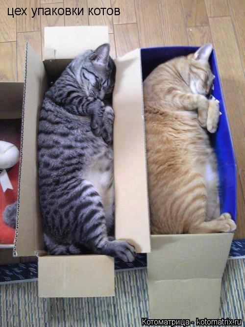 Котоматрица: цех упаковки котов