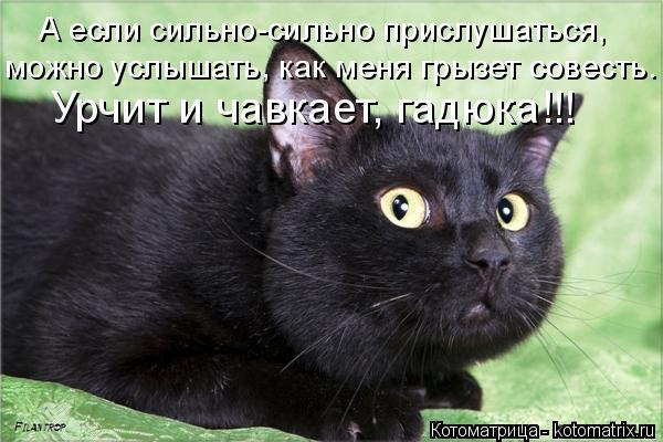 Котоматрица: А если сильно-сильно прислушаться, можно услышать, как меня грызет совесть. Урчит и чавкает, гадюка!!!