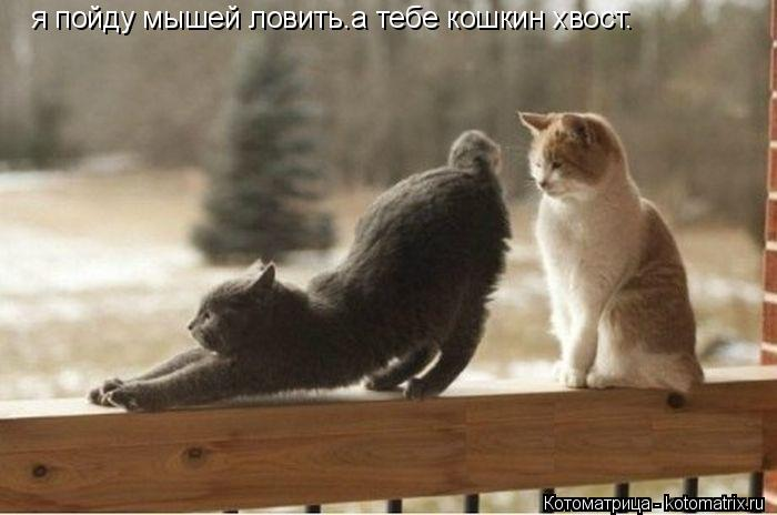 Котоматрица: я пойду мышей ловить.а тебе кошкин хвост.