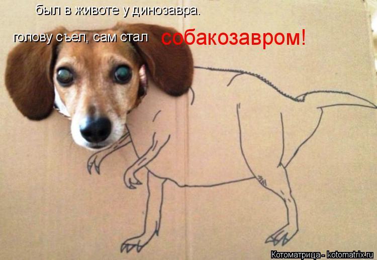 Котоматрица: был в животе у динозавра. голову съел, сам стал собакозавром!