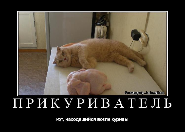 Котоматрица: ПРИКУРИВАТЕЛЬ кот, находящийся возле курицы