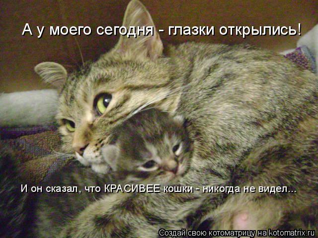Котоматрица: А у моего сегодня - глазки открылись! И он сказал, что КРАСИВЕЕ кошки - никогда не видел...