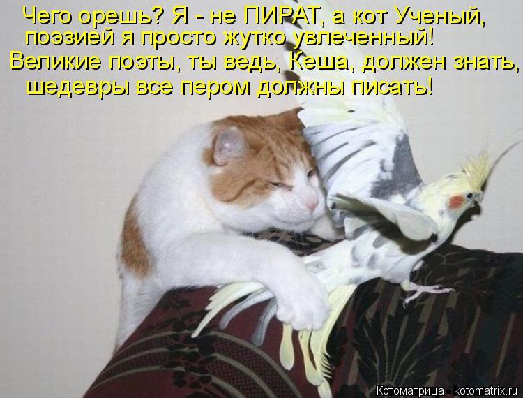 Котоматрица: Чего орешь? Я - не ПИРАТ, а кот Ученый, поэзией я просто жутко увлеченный! Великие поэты, ты ведь, Кеша, должен знать, шедевры все пером должны