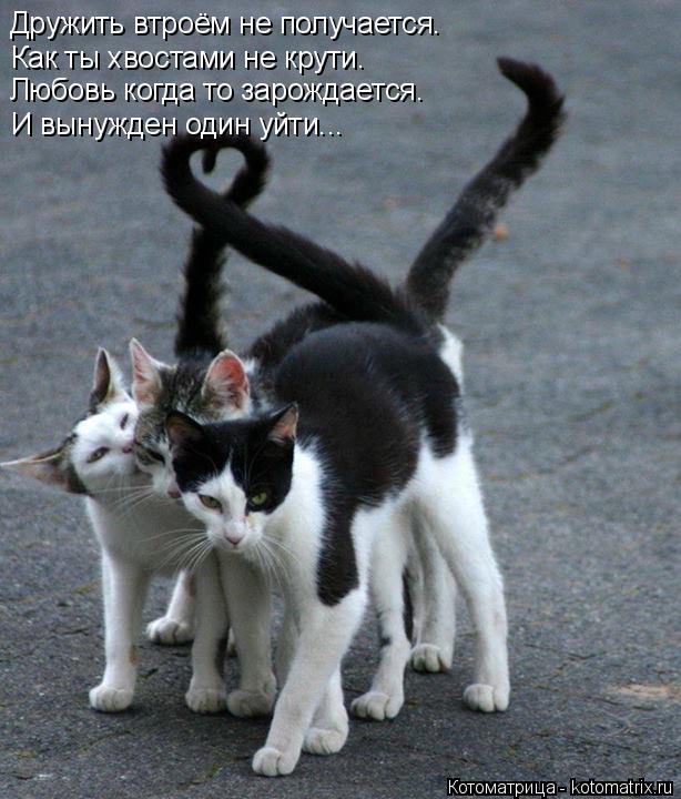 Котоматрица: Дружить втроём не получается. Как ты хвостами не крути. Любовь когда то зарождается. И вынужден один уйти...