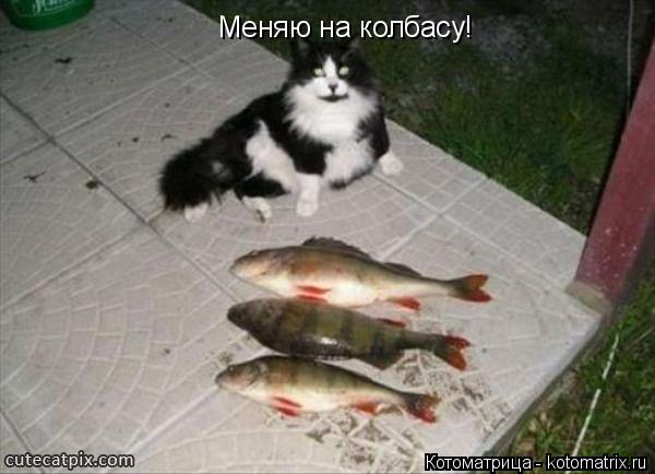 Котоматрица: Меняю на колбасу!