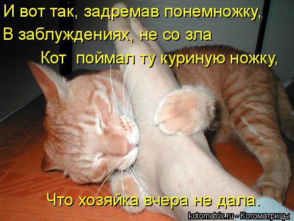 Котоматрица: И вот так, задремав понемножку,  В заблуждениях, не со зла Кот  поймал ту куриную ножку,  Что хозяйка вчера не дала.