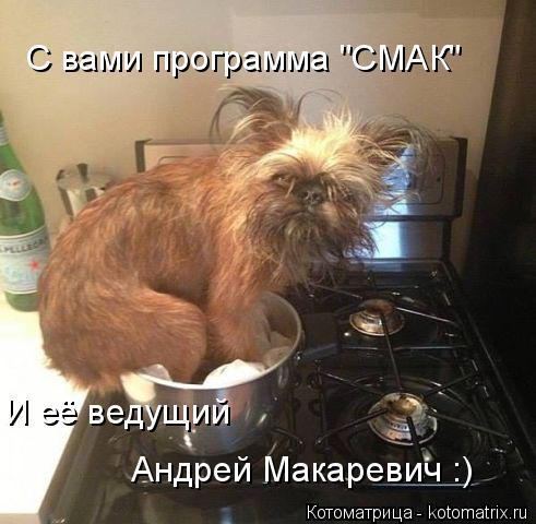 """Котоматрица: С вами программа """"СМАК"""" И её ведущий  Андрей Макаревич :)"""