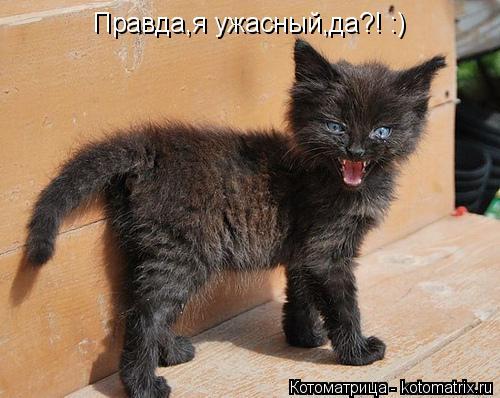 Котоматрица: Правда,я ужасный,да?! :)