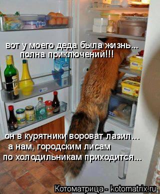Котоматрица: вот у моего деда была жизнь... полна приключений!!! он в курятники вороват лазил... а нам, городским лисам по холодильникам приходится...