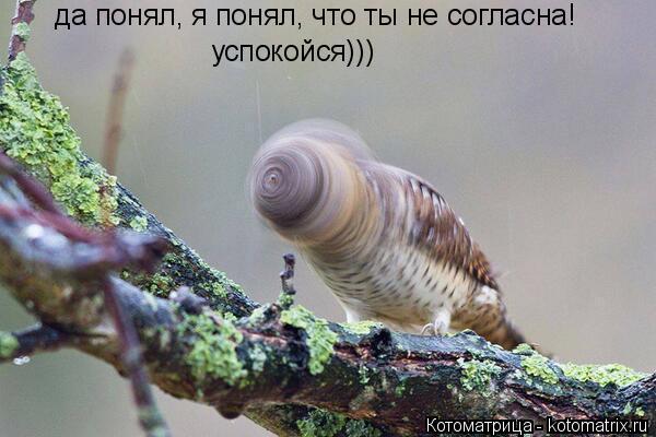 Котоматрица: да понял, я понял, что ты не согласна! успокойся)))