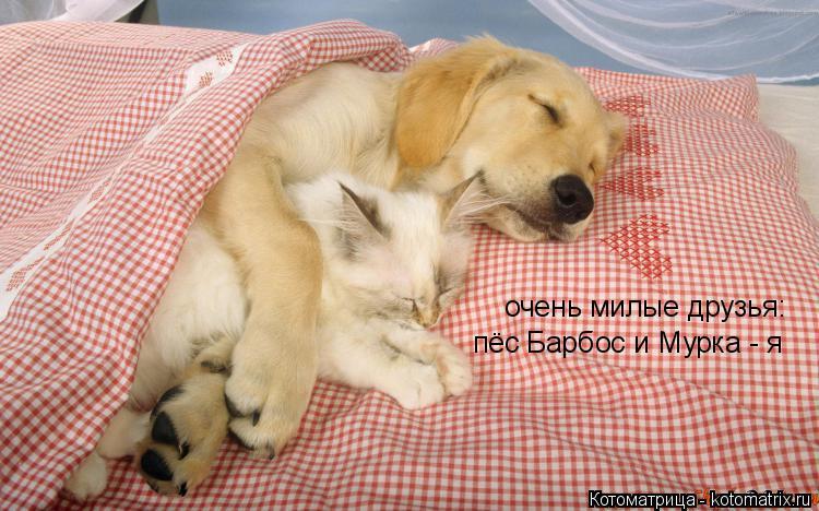 Котоматрица: очень милые друзья: пёс Барбос и Мурка - я