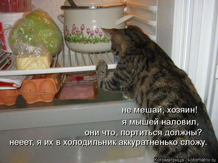 Котоматрица: не мешай, хозяин! я мышей наловил, они что, портиться должны? нееет, я их в холодильник аккуратненько сложу.