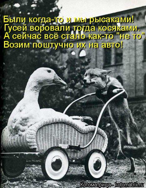 """Котоматрица: А сейчас всё стало как-то """"не то"""", Возим поштучно их на авто! Были когда-то и мы рысаками! Гусей воровали тогда косяками."""