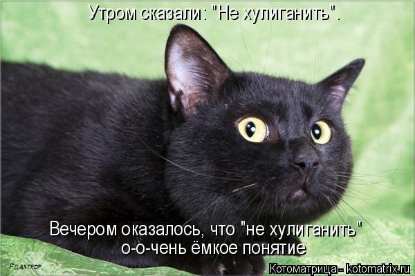 http://kotomatrix.ru/images/lolz/2014/04/11/kotomatritsa_m1.jpg