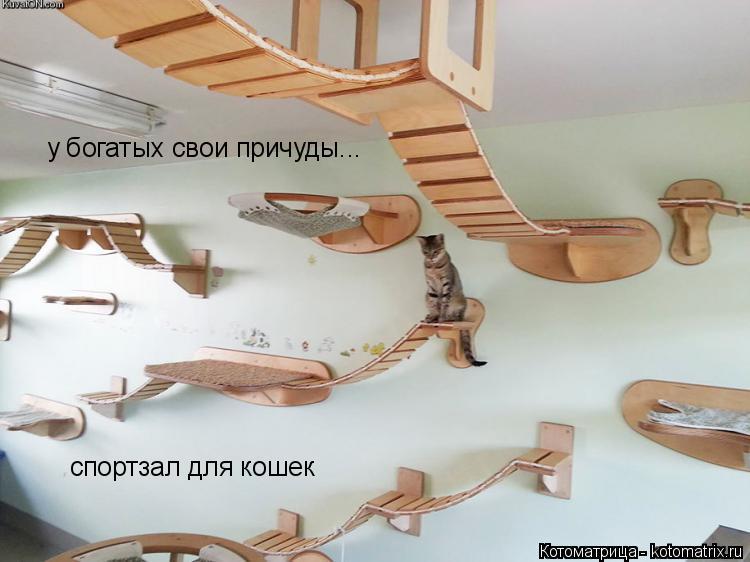 Котоматрица: у богатых свои причуды... спортзал для кошек